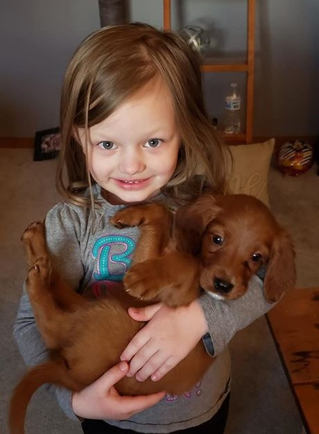 Little Girl Holding a brown puppy.