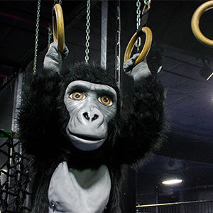 Mongo hanging from rings